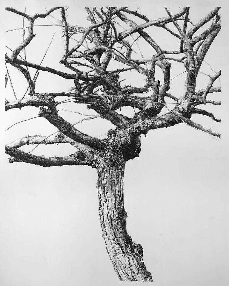 Sandra Allen   Antithesis , 2004   pencil on paper, 60 x 48 in.